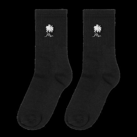 √Palm Tree von Luciano - socks jetzt im Bravado Shop
